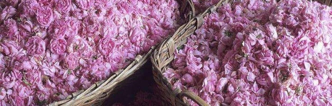 Розова омая